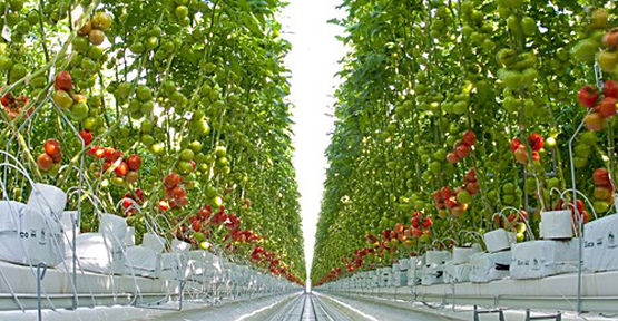 jual drone agriculture murah - Pentingnya Pertanian Modern untuk Keberhasilan Pembangunan Desa Terpencil
