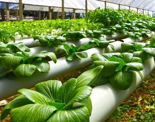 pertanian hydroponik