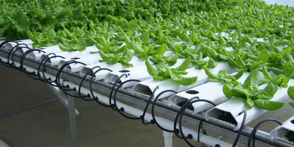 pertanian hidroponik indonesia