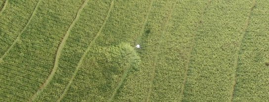 drone sprayer ferto 15 indonesia