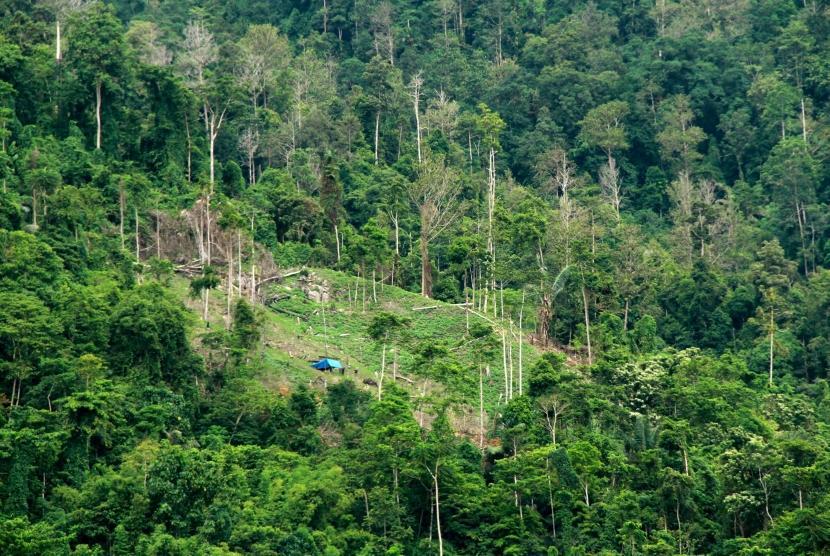 hasil perkebunan indonesia 2020