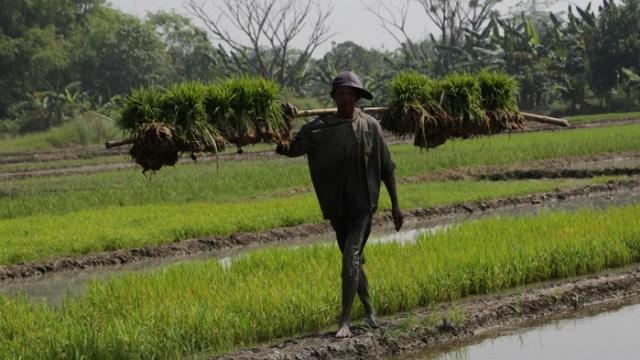 Pertanian Terpadu Definisi
