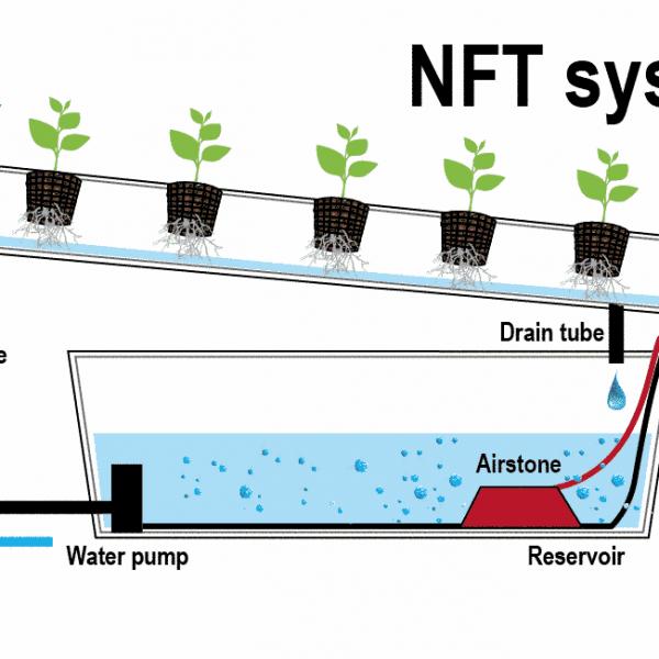 Pastikan kemiringan growing tray dapat mengaliri akar tanaman dengan baik