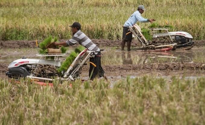 (Pertanian modern Indonesia yang mengalami banyak perubahan / Gambar : starfarm)