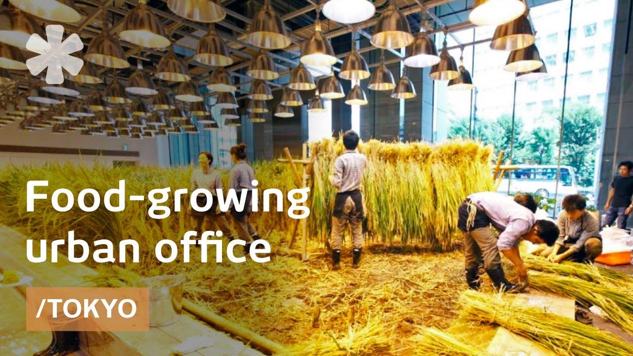 Teknologi Pertanian Jepang dengan Sistem Vertical Farming di Perkantoran (Gambar : www.youtube.com)