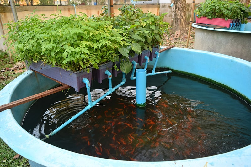 (Budidaya ikan yang ramah lingkungan / Gambar : greenandvibrant.com)