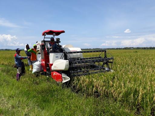 (Indo Combine Harvester)