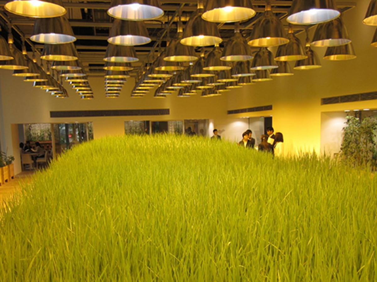 Teknologi Pertanian Jepang dengan Sistem Vertical Farming
