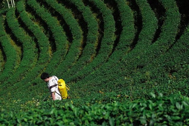 Sprayer pertanian